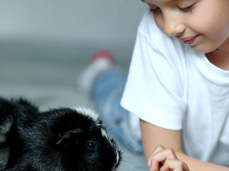 Deshalb können Tiere und Kinder so gut miteinander kommunizieren